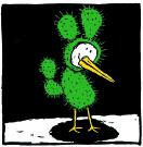 willem kolvoort drieteencactus