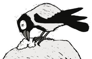 heksenvogel5_bonte-kraai